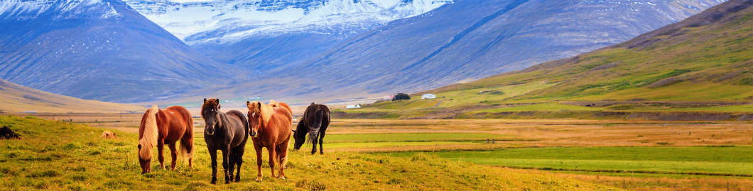 How To See The Best Of Iceland On A Budget