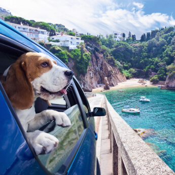 Everything You Need To Know About Taking Pets On Holiday Abroad